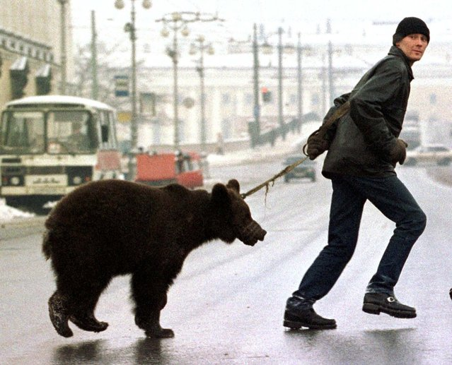 A man leads his pet bear across Nevsky Prospekt in St. Petersburg, Russia, looking for paying customers January 14, 1999. The animal owner claims 30 roubles ($1.50) from customers to be photographed with the bear. (Photo by Reuters)