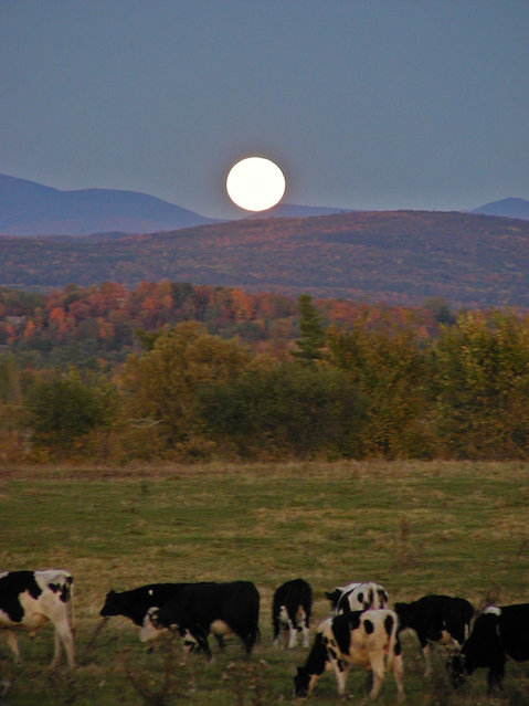 A night after the Harvest Moon near Burlington Vermont. (Photo by Olga Regina Doi)