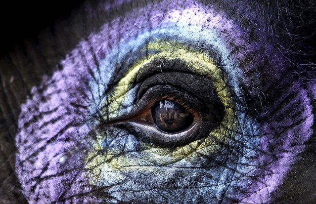 A decorated elephant stands at the Nandankanan Zoological park on the outskirts of the eastern Indian city of Bhubaneswar, on October 4, 2013. Wild life week is celebrated in India from October 2 to 8. (Photo by Biswaranjan Rout/Associated Press)