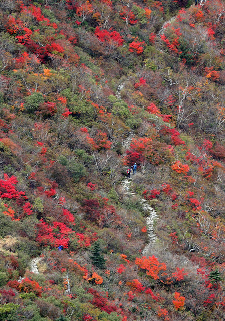 Mountaineers walk along a trail near Jungcheong Shelter on Mount Seorak in Yangyang, Gangwon, South Korea, 28 September 2018, as trees on the mountain turn autumn colors of red and yellow. A definition by the Korea Meteorological Administration says that the start of the changing of the leaves is pronounced when 20 percent of the mountain's trees from its peak are tinged. Fall foliage is expected to reach peak color around 17 to 18 October, when 80 percent of the trees on the mountain are tinged with red and yellow. (Photo by EPA/EFE/Yonhap)