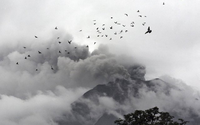 A flock of birds fly near Mount Sinabung as seen from Berastepu, North Sumatra, Indonesia, Tuesday, Dec. 3, 2013. About 15,000 people have been evacuated from 17 villages on the slope of Mount Sinabung after authorities raised the alert status of the volcano to the highest level last week. (Photo by Binsar Bakkara/AP Photo)
