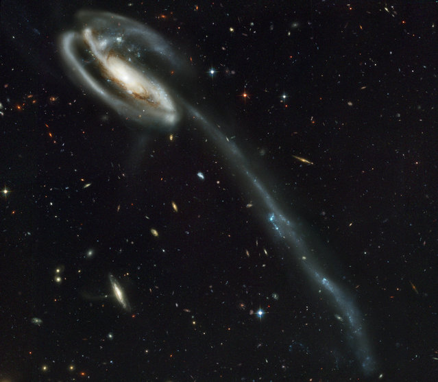 This image made by the NASA/ESA Hubble Space Telescope shows galaxy UGC 10214 with the long streamer of stars. Its distorted shape was caused by another galaxy passing nearby. (Photo by NASA, Holland Ford (JHU), ACS Science Team, ESA via AP Photo)
