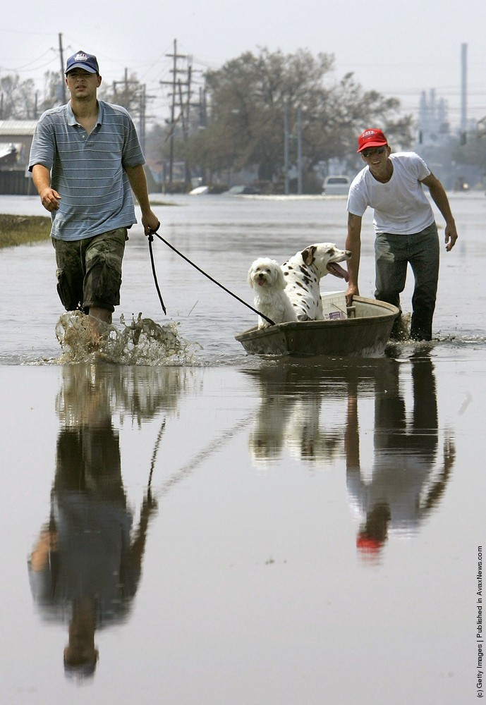 Don't Forget About The Animals During Flooding!
