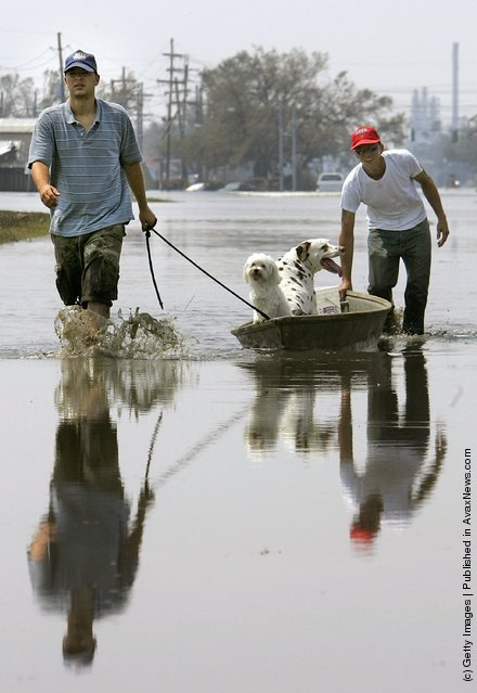 Donnie Panarello Sr. (R) and Donnie Panarello Jr. (L) pull dogs Chance (2nd R) and Buddy down a flooded street as they evacuate the hard-hit Chalmette community of Saint Bernard's Parish September 3, 2005 in New Orleans