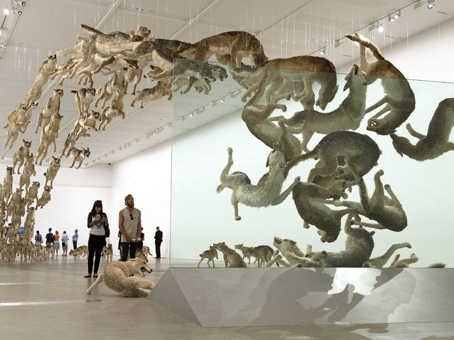 """Extraordinaty display at the """"Falling Back To Earth"""" exhibition created by Chinese artist Cai Guo Qiang at the Gallery of Modern Art (GOMA) in Brisbane. (Photo by Dave Hunt/EPA)"""