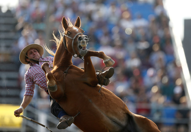 A gaucho rides an untamed horse during Creole week celebrations in Montevideo, Uruguay on April 17, 2019. (Photo by Andres Stapff/Reuters)