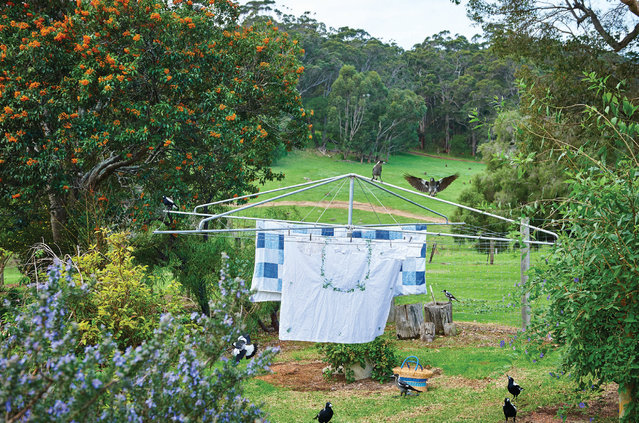 Jean Hunter's beloved mob of magpies on her clothesline at Home Farm in the Margaret River. (Photo by Frances Andrijich)