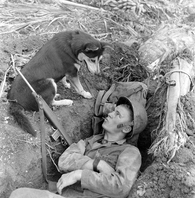 View of an American marine as he lies in a foxhole and whistles at a husky, one of the scouting dogs used during the landing on Guam, August 1944. (Photo by W. Eugene Smith/Time & Life Pictures/Getty Images)
