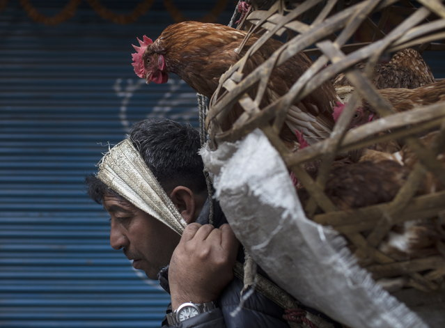 A chicken vendor carries a basket as he walks towards the market during early morning in Kathmandu, Nepal, 19 February 2019. (Photo by Narendra Shrestha/EPA/EFE)