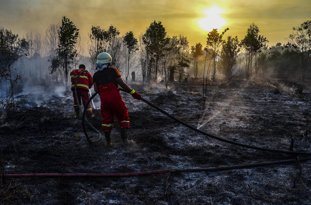 Firefighters extinguish a fire in Kampar, Riau province on Indonesia's Sumatra island on August 13, 2019. Indonesian authorities are deploying thousands of extra personnel to prevent a repeat of the 2015 fires, which were the worst for two decades and choked the region in haze for weeks. (Photo by Wahyudi/AFP Photo)