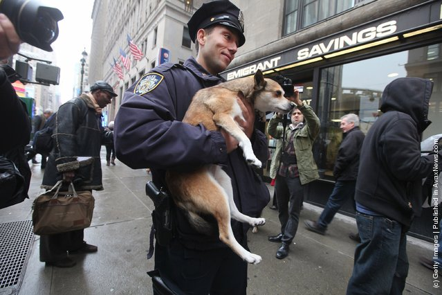 NYPD officer Danny Purnavel holds Eowyn, a six-year-old Norwegian Lundehund, during the 136th annual Westinster Kennel Club Dog Show preview