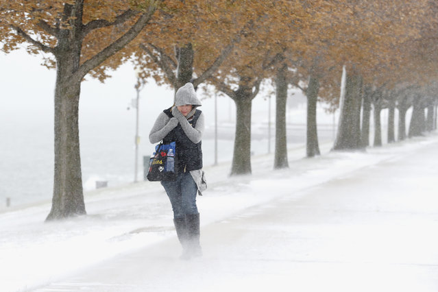 A woman walking the half mile from Chicago's Adler Planetarium to the Chicago Aquarium braces herself in the stiff wind and blowing snow off Lake Michigan, Monday, November 11, 2019, in Chicago. (Photo by Charles Rex Arbogast/AP Photo)
