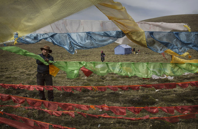 A Tibetan nomad hangs prayer flags placed at his camp for picking cordycep fungus on the 15th day of Saka Dawa, the holiest day of the Buddhist calendar when it is prohibited from harvesting, on May 21, 2016 near  Sershul on the Tibetan Plateau in the Garze Tibetan Autonomous Prefecture of Sichuan province. (Photo by Kevin Frayer/Getty Images)