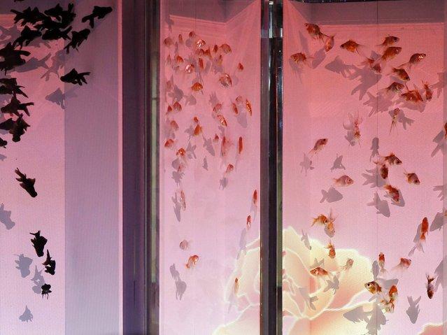 """Goldfish swimming in the """"Byoburium II"""" installation. (Photo by Kiyoshi Ota/EPA)"""
