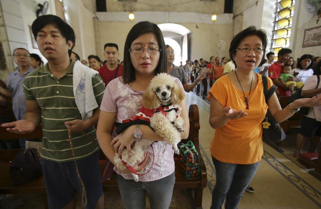 A Filipino pet owner carries her dog as they attend mass before the animal blessing rites at the Our Lady of Remedies Parish Church in Malate district, Manila, Philippines on Sunday, October 5, 2014. Several Filipinos brought their pets to be blessed during the annual event which is also done to celebrate the feast day of St. Francis of Assisi, the patron saint of animals and ecology. (Photo by Aaron Favila/AP Photo)