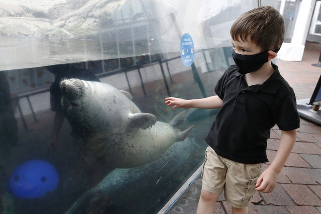 Leo Mitchell, 4, watches a seal at the New England Aquarium, Friday, July 17, 2020, in Boston. The Aquarium reopened on Thursday on a reservations only basis after being closed since March due to the coronavirus. (Photo by Michael Dwyer/AP Photo)