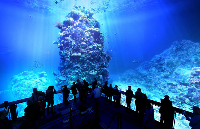 """Vistors stand in the new 360°-Panorama """"Great Barrier Reef"""" in the Panometer Leipzig in Leipzig, Germany, 2 October 2015. The panaoroma view is to replicate Australia's famous Great Barrier Reef with 3500 cubic metres of flora and fauna from the region. (Photo by Jan Woitas/EPA)"""