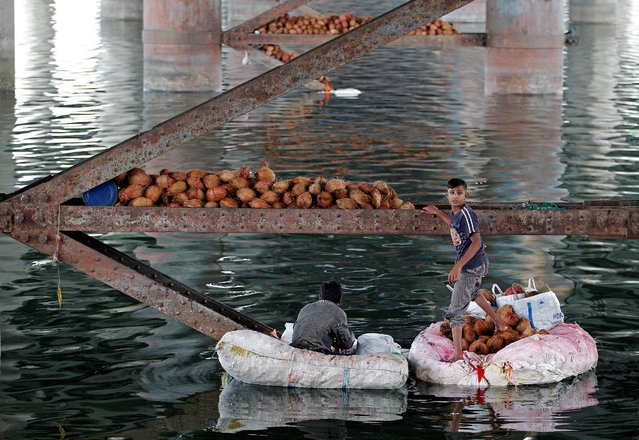 A boy collects coconuts thrown as offerings by worshippers into the Sabarmati river, a day after the immersion of idols of the Hindu god Ganesh, the deity of prosperity, in Ahmedabad, India September 16, 2016. (Photo by Amit Dave/Reuters)