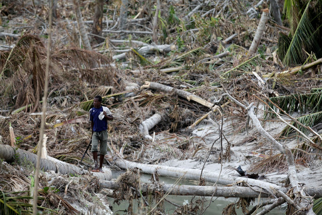 A boy looks for coconuts in a grove destroyed by Hurricane Matthew in Roche-a-Bateu, Haiti, October 10, 2016. (Photo by Andres Martinez Casares/Reuters)