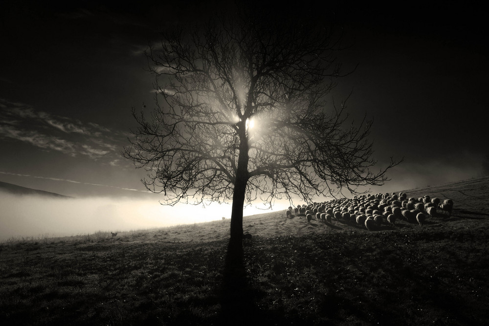 Rural Daily Life in Radicondoli by Photographer Marco Sgarbi