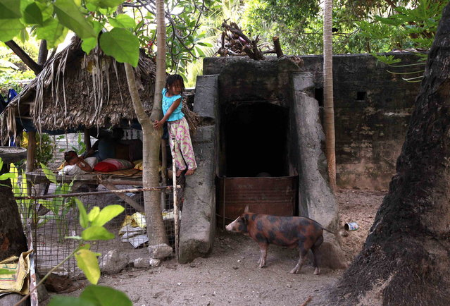 A girl stands on a World War Two Japanese bunker, which is being used as a pigsty, next to her home in the village of Betio on South Tarawa in the central Pacific island nation of Kiribati May 23, 2013. (Photo by David Gray/Reuters)