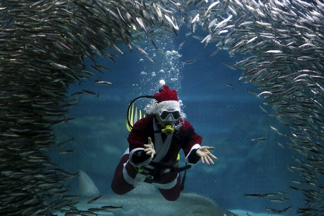"A diver dressed in a Santa Claus costume swims with sardines during a promotional event for Christmas ""Sardines Feeding Show with Santa Claus"" at the Coex Aquarium in Seoul, South Korea, December 9, 2015. (Photo by Kim Hong-Ji/Reuters)"