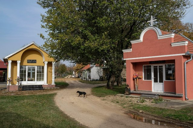 A dog walks past chapels at a cemetery in the village of Smoljinac, Serbia, October 25, 2016. (Photo by Marko Djurica/Reuters)