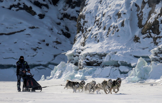 A musher is pulled by a team of Siberian Husky dogs during a practice session on the frozen Biryusa River in the Siberian Taiga area outside Krasnoyarsk, Russia on February 20, 2019. (Photo by Ilya Naymushin/Reuters)