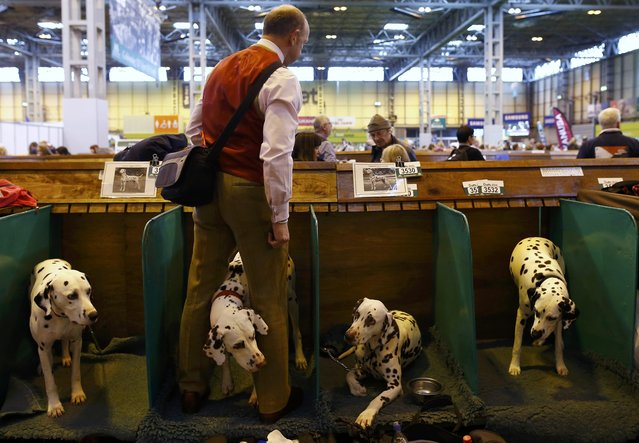 A man stands with his Dalmatians during the first day of the Crufts Dog Show in Birmingham, Britain March 10, 2016. (Photo by Darren Staples/Reuters)