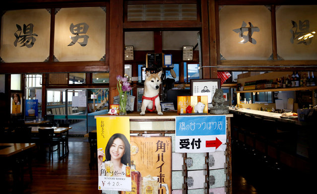 """A pet dog sits on a front desk at Hatanodai Indoor Fishing, an indoor fishing facility which was converted from an old bathhouse that went out of business, in Tokyo, Japan, March 14, 2019. The sign on the door reads, """"For men (L), For women"""". (Photo by Kim Kyung-Hoon/Reuters)"""