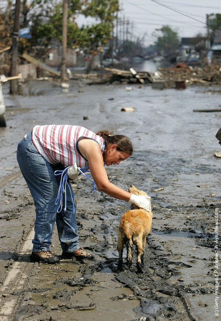Judy Sluigen pets a dog that she found wandering the streets September 10, 2005 in New Orleans, Louisiana