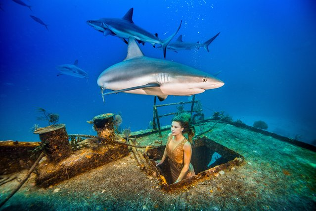 A handout picture made available on April 14, 2016 shows the Brazilian TV personality and conservationist Karina Oliani films in a shark sanctuary for a project highlighting the species' risk of extinction in Nassau, the Bahamas. (Photo by Alex Socci/Barcroft Animals)