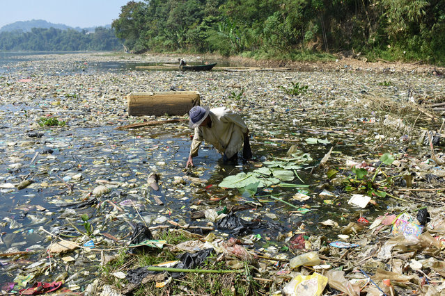 A scavenger collects plastic waste for recycling on the Citarum river choked with garbage and industrial waste, in Bandung, West Java province on June 26, 2019. The river, one of the world's most polluted after decades of failed clean-up efforts, in 2018 was earmarked for revitalisation by Jakarta to make its water drinkable again by 2025. (Photo by Timur Matahari/AFP Photo)