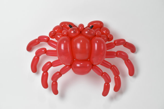 A hermit crab by Masayoshi Matsumoto. (Photo by Masayoshi Matsumoto/Caters News Agency)