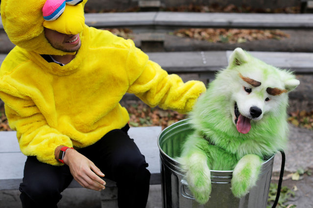 Mark Belio, dressed as Big Bird of Sesame Street, sits with Biff the Samoyed, dressed as Oscar the Grouch, at the Tompkins Square Halloween Dog Parade in Manhattan, New York City, U.S., October 20, 2019. (Photo by Andrew Kelly/Reuters)
