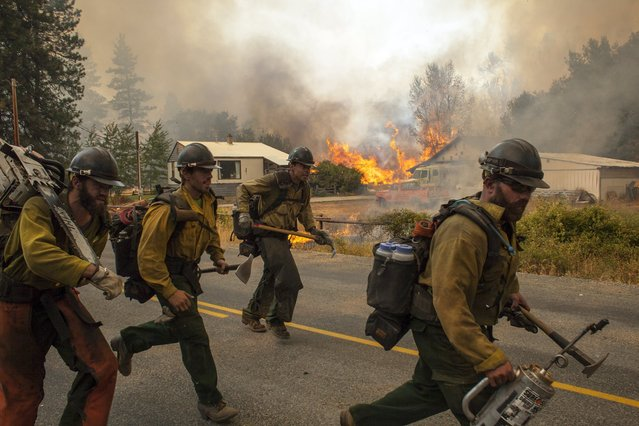 Firefighters flee as the Twisp River fire advances unexpectedly near Twisp, Washington August 20, 2015.  Three firefighters in Washington state were killed and four injured while battling a wildfire threatening the town of Twisp, officials said on Wednesday, as more than a dozen major blazes burned in parched Western U.S. states. (Photo by David Ryder/Reuters)