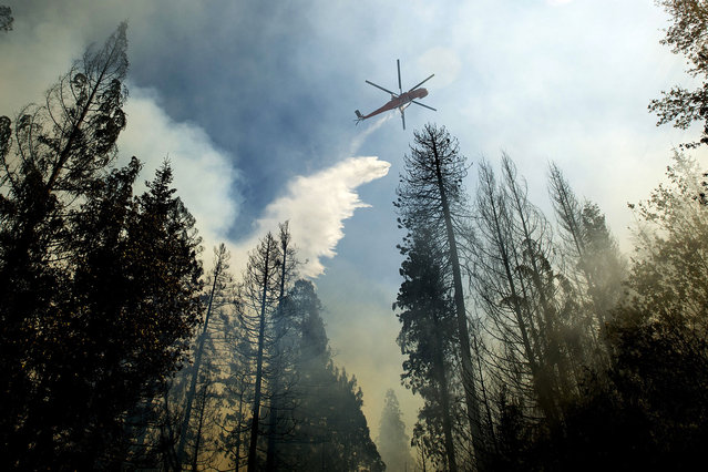 A helicopter drops water while battling the King Fire near Fresh Pond, California September 16, 2014. (Photo by Noah Berger/Reuters)