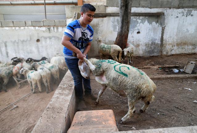 A Palestinian man drags a goat at a livestock market, ahead of the Eid al-Adha festival near Jerusalem September 11, 2016. (Photo by Ammar Awad/Reuters)
