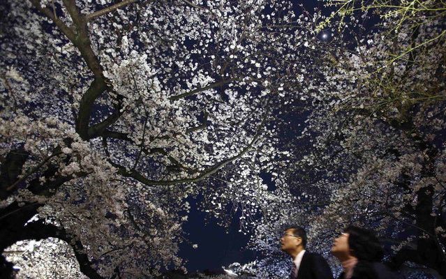 Visitors look up at illuminated cherry blossoms in full bloom along the Chidorigafuchi moats in Tokyo March 22, 2013. Many people enjoy viewing the blossoms all over the country during this season. (Photo by Toru Hanai/Reuters)