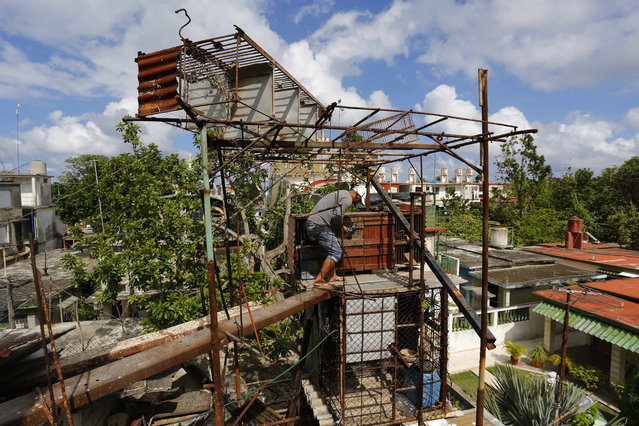 """In this Saturday, November 4, 2017 photo, pigeon breeder Eduardo Montufar removes a pigeon from its cage in Havana, Cuba. On thousands of roofs in Havana, boys and men can be found working on their coops or taking care of their birds and discussing the intricacies of a sport in which the pigeons are often referred to as """"thieves"""" or """"killers"""". (Photo by Desmond Boylan/AP Photo)"""