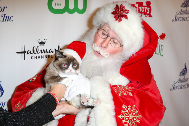 Grumpy Cat arrives at the 84th Annual Hollywood Christmas Parade on Sunday, November 29, 2015, in Los Angeles. (Photo by Rich Fury/Invision/AP Photo)