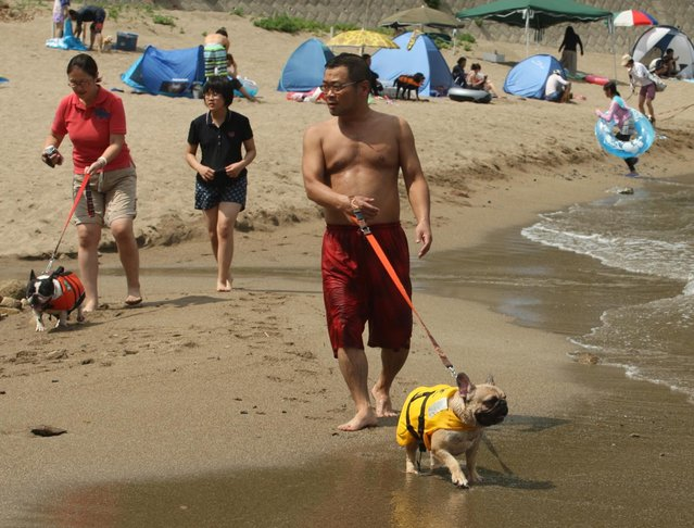 People walk with their pet dogs at Takeno Beach on August 4, 2013 in Toyooka, Japan. This beach is open for dogs and their owners every summer between the months of June and September. (Photo by Buddhika Weerasinghe/Getty Images)