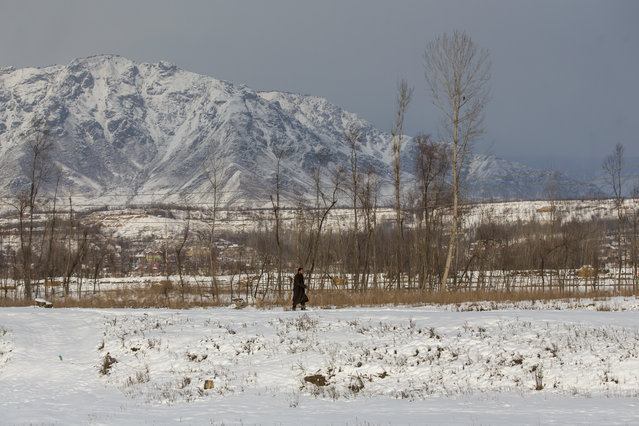 A Kashmiri man walks on a snow covered field after fresh snowfall at Awantipora, some 32 kilometers (20 miles) from Srinagar, Indian controlled Kashmir, Monday, January 16, 2017. The only all weather road link that connects the Kashmir valley to the rest of India was closed Monday due to heavy snowfall. (Photo by Dar Yasin/AP Photo)
