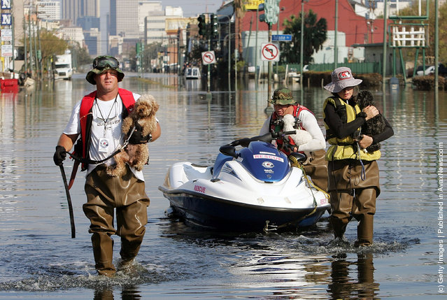 Civilian rescuers (L-R) David Coupe, Pat Alladio and Shawn Alladio carry dogs to safety on a flooded street September 11, 2005 in New Orleans, Louisiana