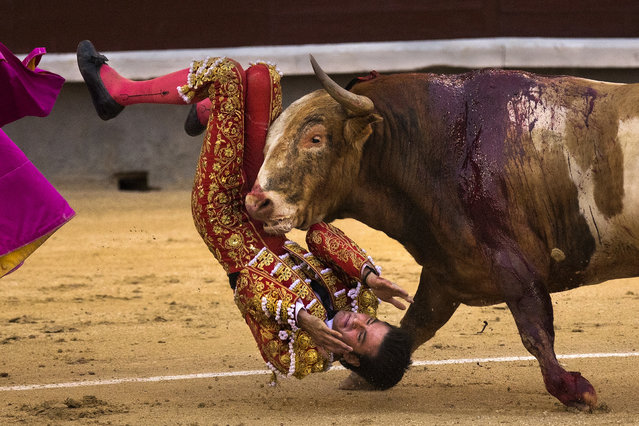 Bullfighter Leonardo San Sebastian is gored by a bull during a bullfight at Las Ventas bullring in Madrid, Spain, Sunday, May 3, 2015. Bullfighting is a traditional spectacle in Spain and the season runs from March to October. (Photo by Andres Kudacki/AP Photo)