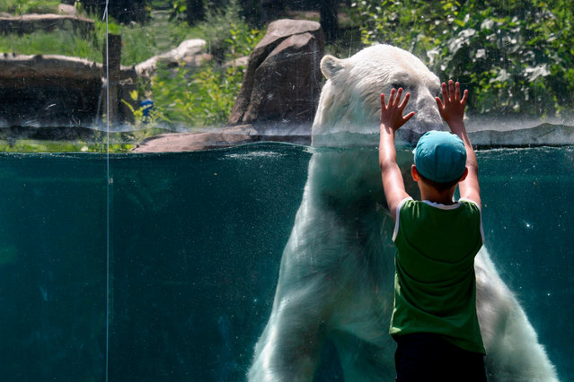 A child gestures in front of a polar bear in its pond at the zoo of Mulhouse, eastern France, on June 26, 2019 as temperatures were to soar to record highs in several European countries today. (Photo by Sebastien Bozon/AFP Photo)