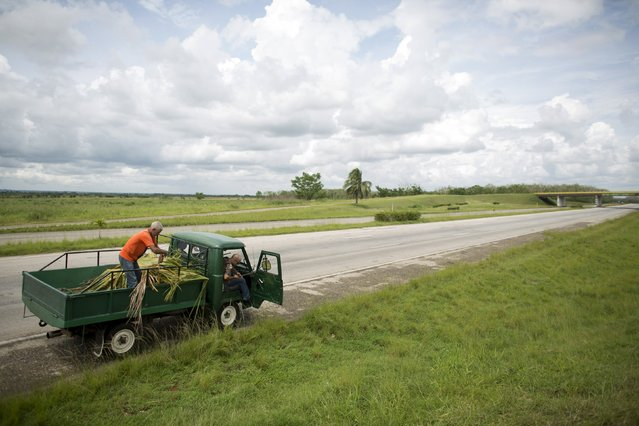 A truck taking ten baby Cuban crocodiles (Crocodylus rhombifer) stops on the highway to put palm branches to protect their cages from the sun on their way to Zapata Swamp National Park, June 4, 2015. Ten baby crocodiles have been delivered to a Cuban hatchery in hopes of strengthening the species and extending the bloodlines of a pair of Cuban crocodiles that former President Fidel Castro had given to a Soviet cosmonaut as a gift in the 1970s. Picture taken June 4, 2015. REUTERS/Alexandre Meneghini