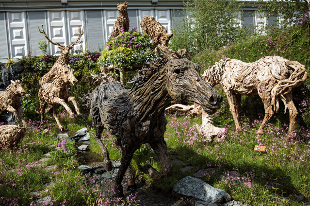 Driftwood sculptures of animals by sculptor James Doran Webb on display at the Chelsea Flower Show on May 22, 2017 in London, England. (Photo by Jack Taylor/Getty Images)