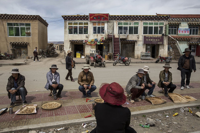 Chinese and Tibetan nomads buy and sell cordycep fungus on May 20, 2016 at a market in Sershul on the Tibetan Plateau in the Garze Tibetan Autonomous Prefecture of Sichuan province. (Photo by Kevin Frayer/Getty Images)