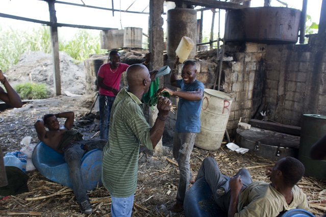 In this June 19, 2017 photo, laborers joke around after working an 8-hour-shift as they drink a recently finished batch of clairin at the Ti Jean distillery where they produce it in Leogane, Haiti. Ti Jean owner Jeanty Bonnefois says his workers make sure they remove the toxic methanol byproduct that occurs during distillation, and his clairin has a good reputation among local consumers. (Photo by Dieu Nalio Chery/AP Photo)